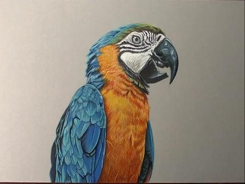 【3d素描基础教程- 3d鹦鹉的绘画教程  】 (分享自