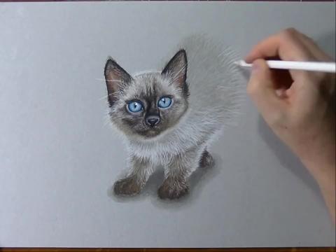 【素描基础教程- 3d小猫的绘画教程