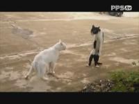PPS视频:最萌喵星人大合集 各种神态笑料百出